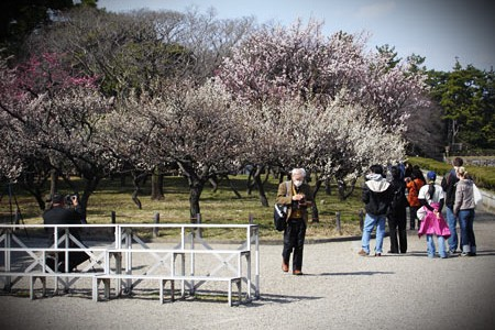 cherryblossum_view_2