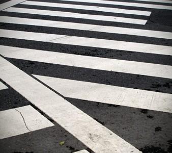 zebra_xing
